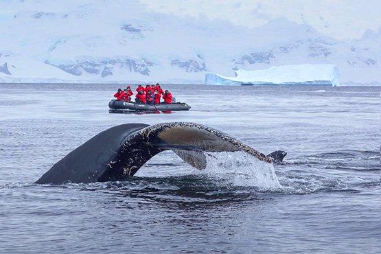 טיול לאנטארקטיקה – הפלגה לחוג האנטארקטי | 14 ימים