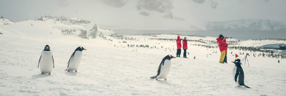 טיול לאנטארקטיקה - הפלגה לחוג האנטארקטי