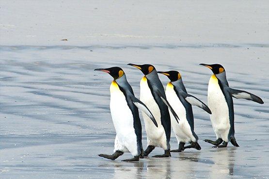 טיול לאנטארקטיקה – הפלגה אל איי פוקלנד, ג'ורג'יה הדרומית ואנטארקטיקה | 21 יום