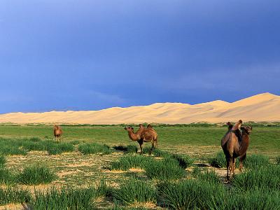 דיונות חונגורין אלס (Khongoriin Els dunes), מונגוליה
