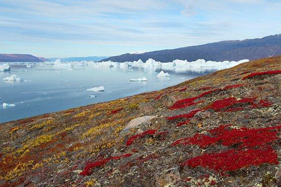 טיול לשפיצברגן, גרינלנד ואיסלנד – הפלגה לשפיצברגן, גרינלנד ואיסלנד | 15 ימים