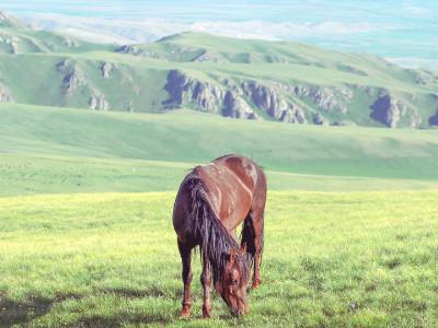 טיול פרטי מודרך באוזבקיסטן ובקירגיזסטן (מבוסס על הטיסות הישירות) | 15 ימים