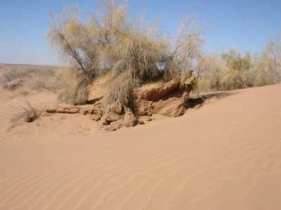 אוזבקיסטן, המדבר האדום - Kizilkum