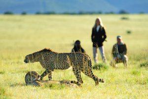 ספארי פרטי, דרום אפריקה