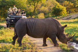 הפארק הלאומי קרוגר (Kruger National Park), דרום אפריקה