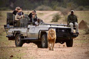 ספארי פרטי במחוז לימפופו (Limpopo), דרום אפריקה