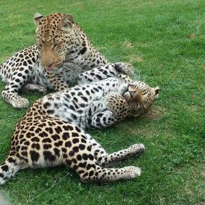 חוות Wildlife Ranch Cango, דרום אפריקה