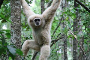 שמורת הקופים Monkeyland, דרום אפריקה