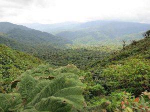 מונטה ורדה (Monteverde), טיול לקוסטה ריקה