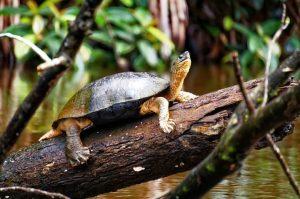 שמורת טורטוגרו (Tortuguero National Park), טיול לקוסטה ריקה