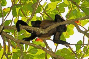 פארק קאררה (Carara National Park), קוסטה ריקה