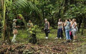 סיור שוקולד בטירימבינה (Tirimbina Biological Reserve), קוסטה ריקה